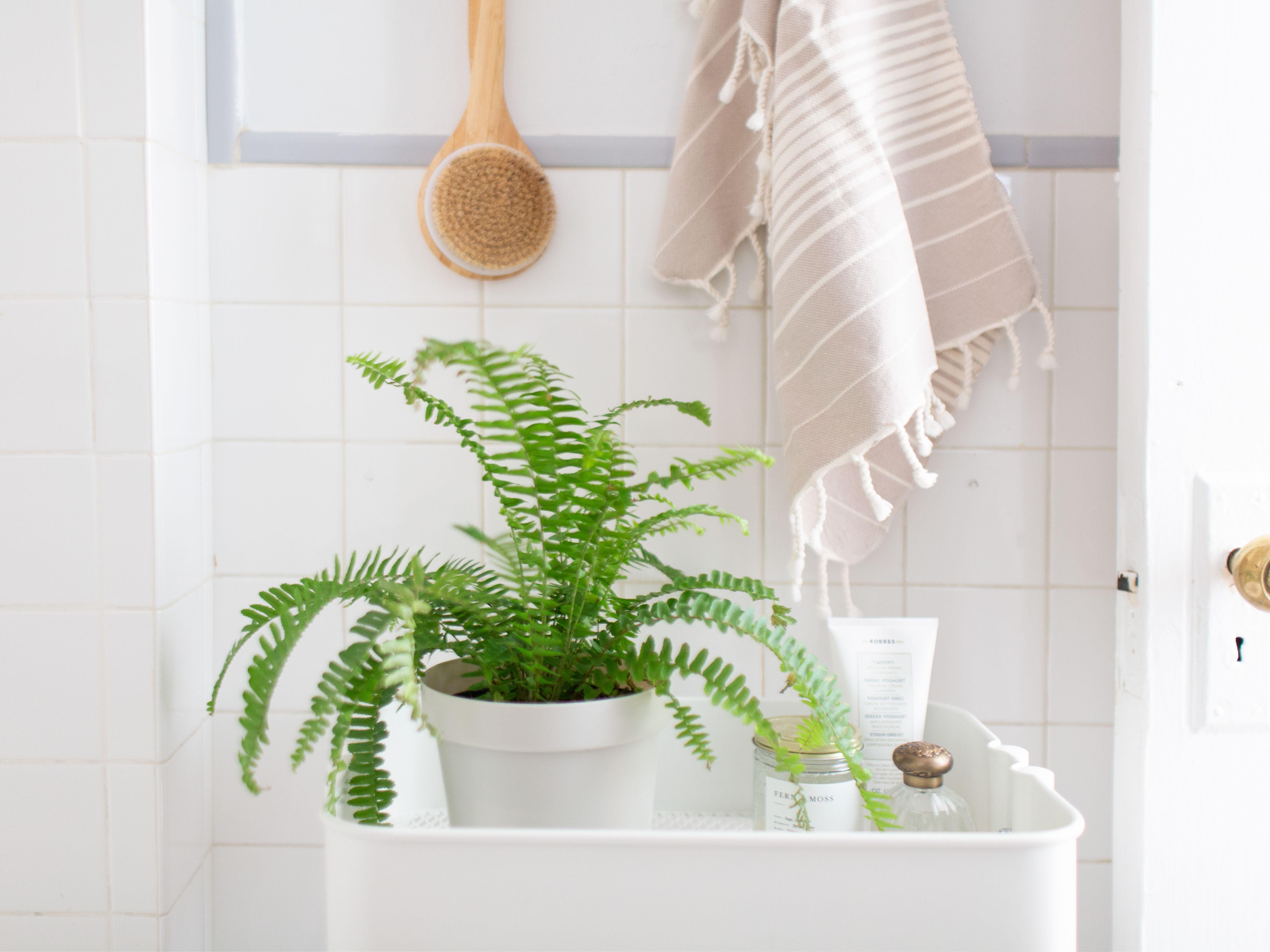 4 Best Houseplants for Your Bathroom
