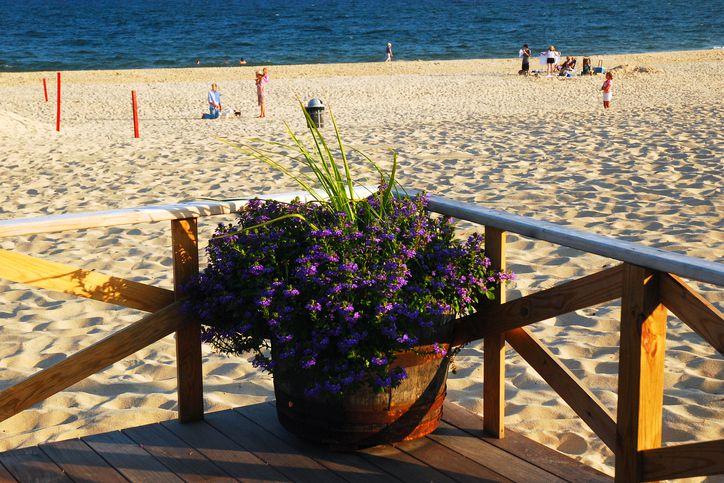 Beach Container Garden