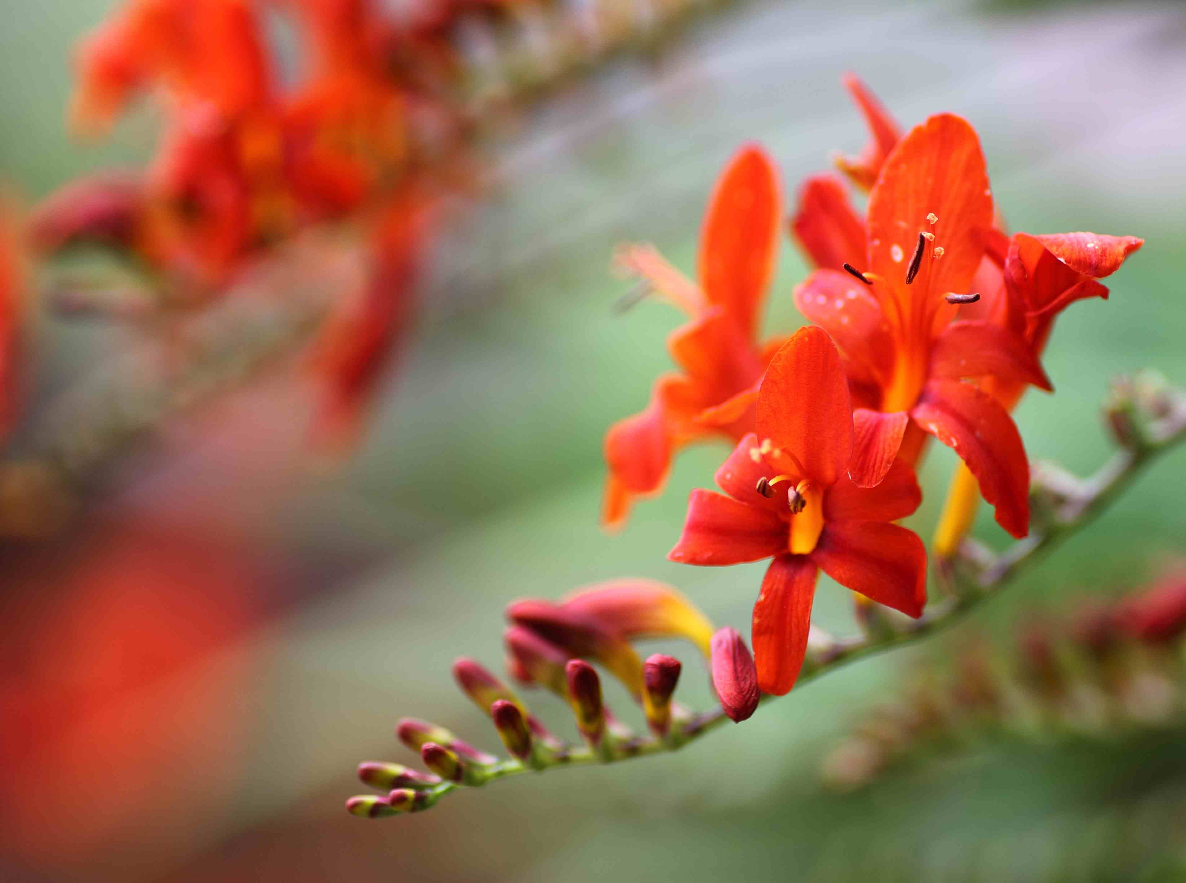 Pictures of Plants with Orange Flowers