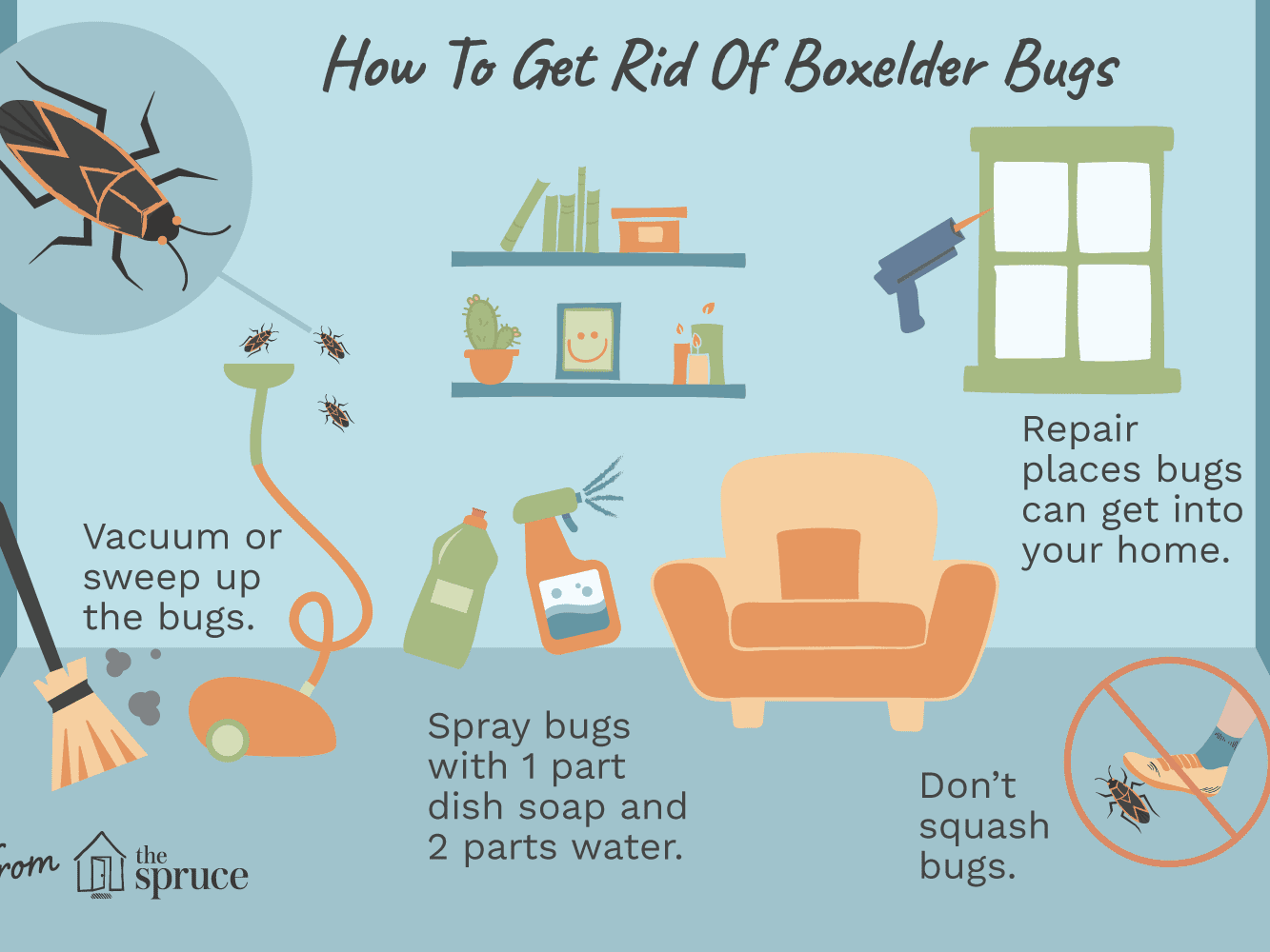 How To Keep Boxelder Bugs Out Of Your Home