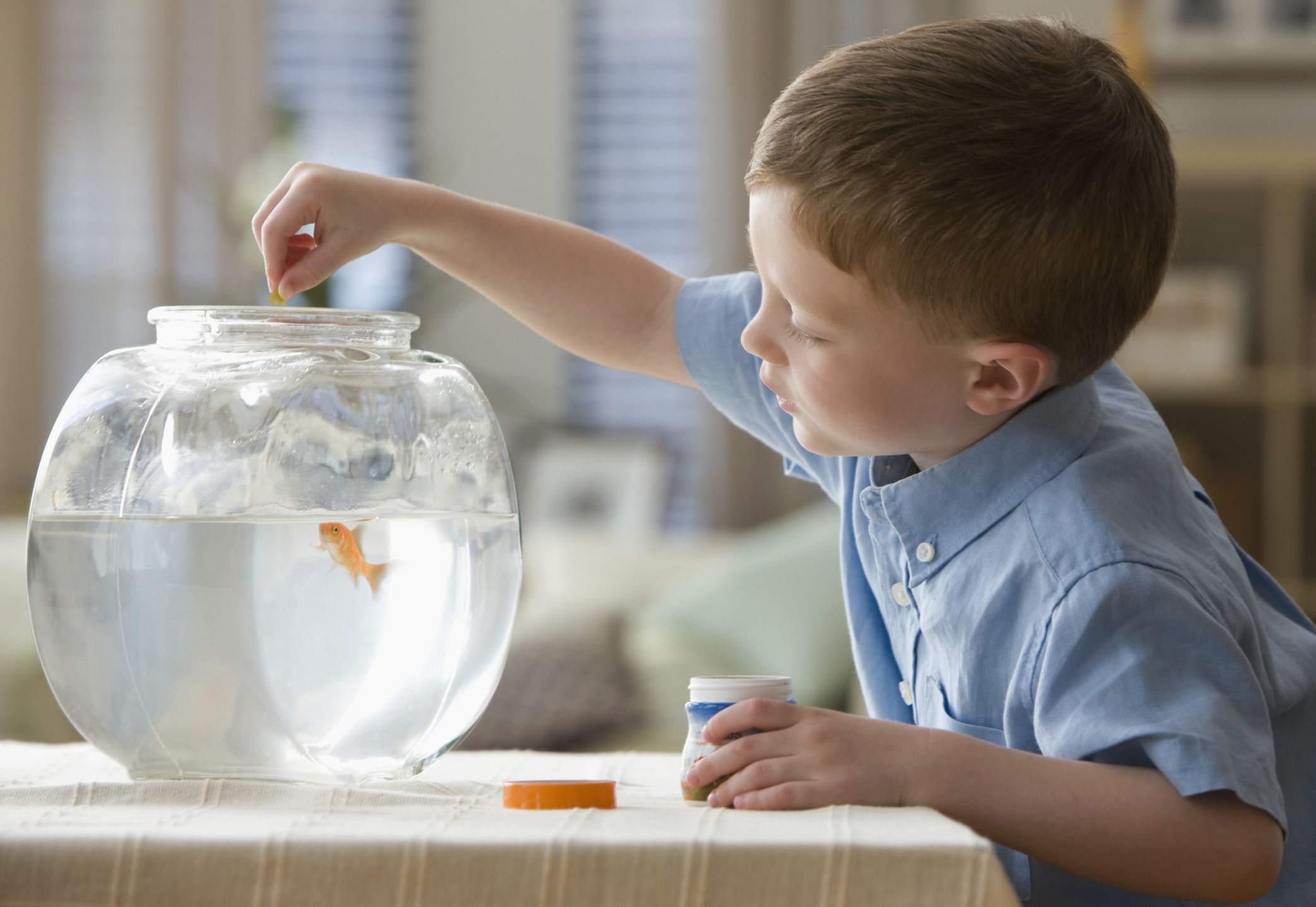 Boy Feeding Fish in Fish Bowl