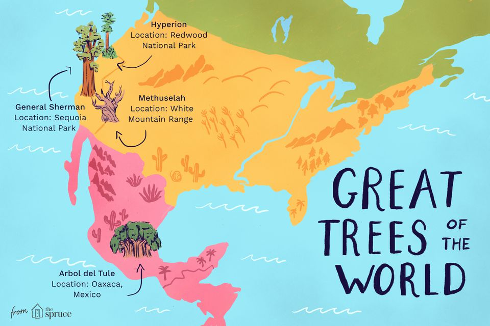 great trees of the world illustration