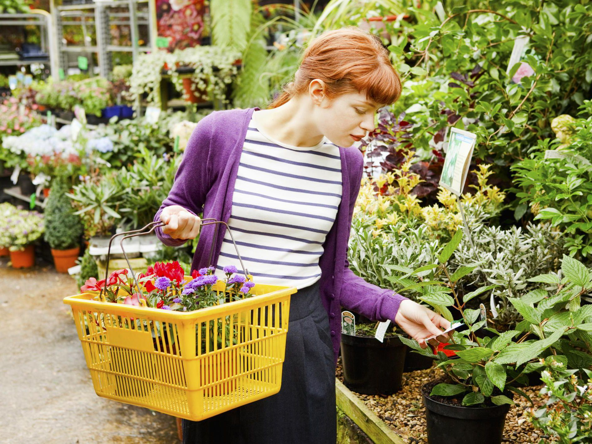 How To Choose Healthy Plants At The Nursery