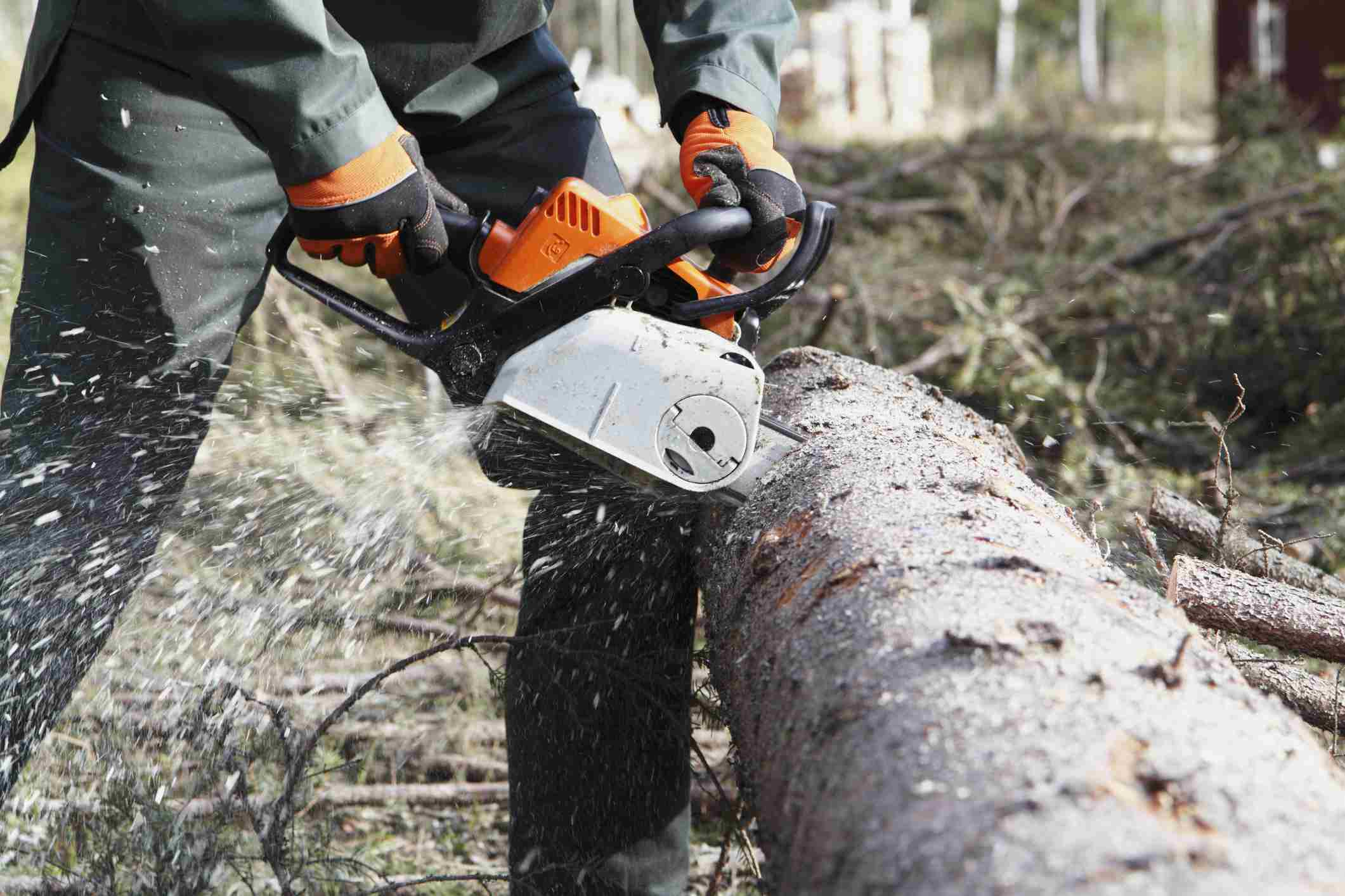 Person with chainsaw bucking up a log.
