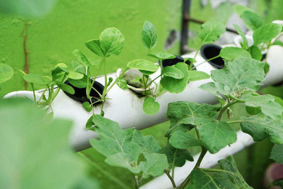 example of hydroponic gardening