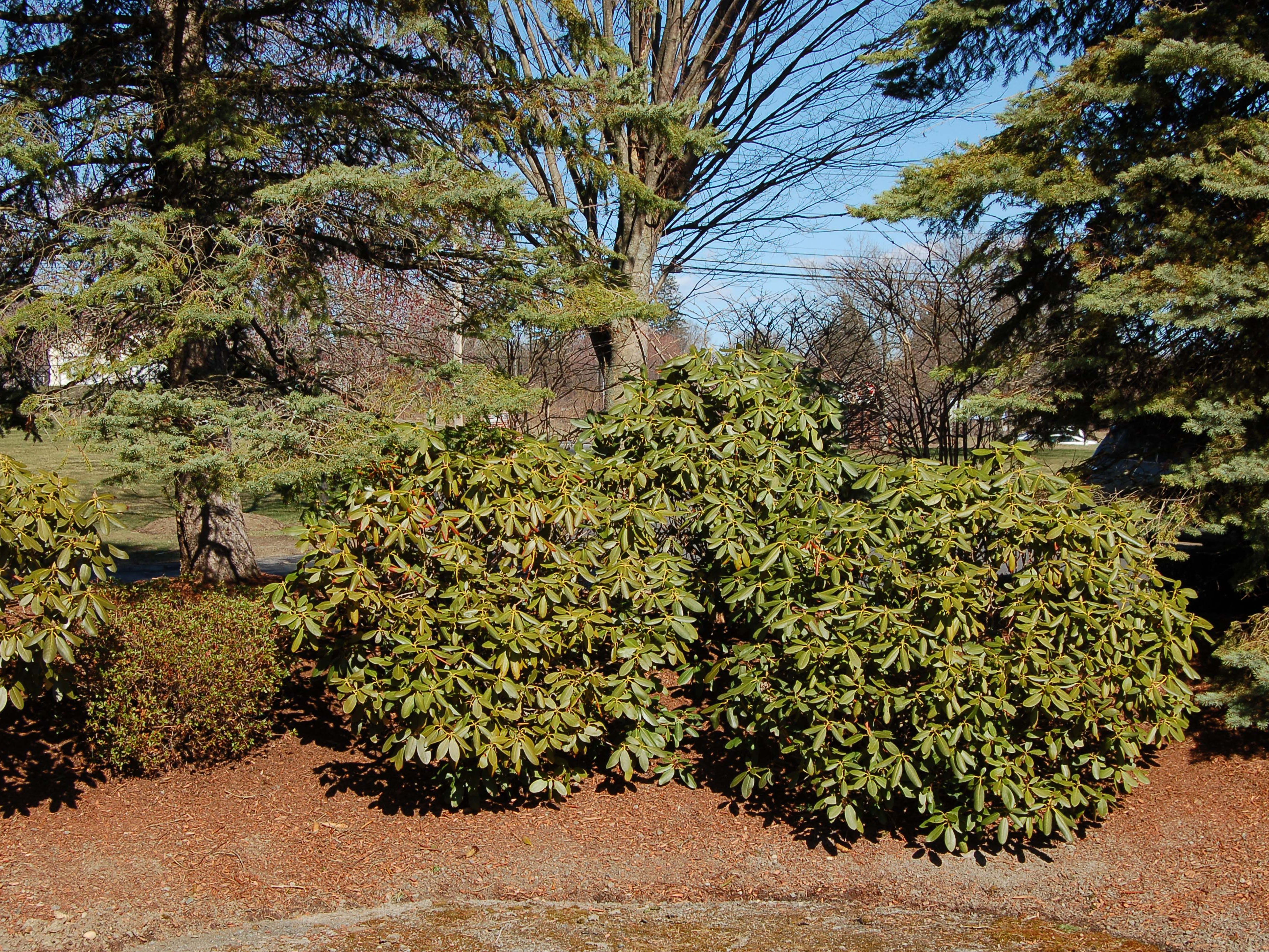 How To Build And Use Berms In Your Yard S Landscape
