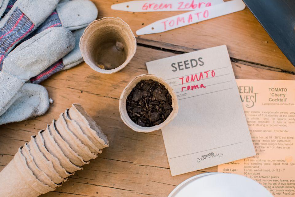 saving tomato seeds