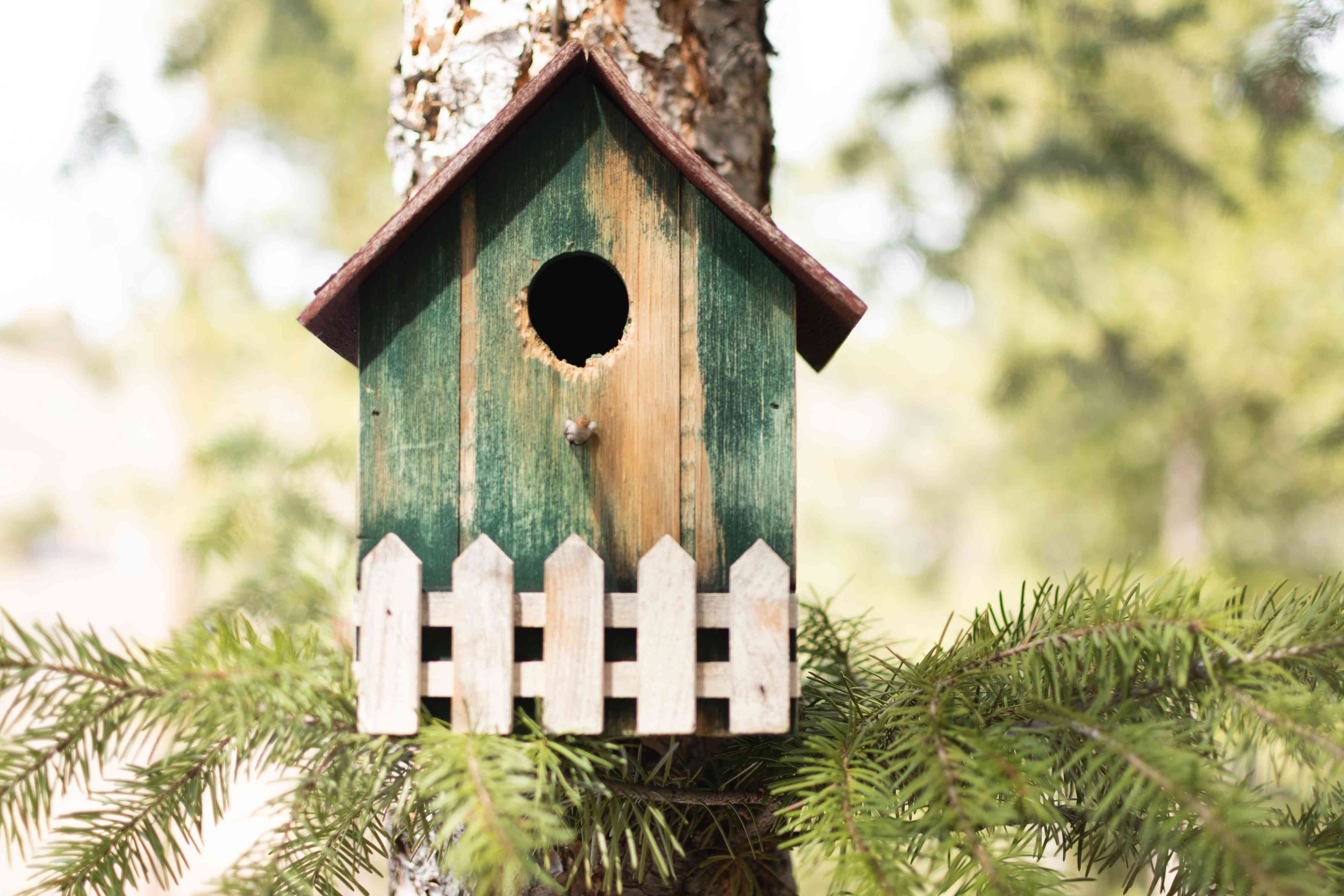 Wooden green birdhouse secured on pine tree with branches underneath