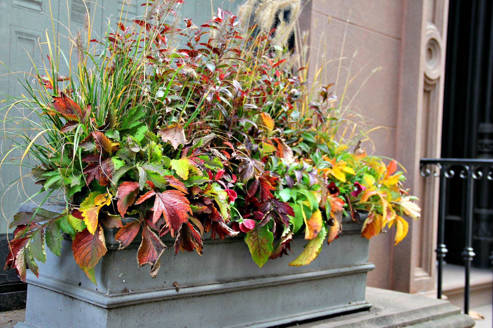 Fall Window Box Ideas And Pictures