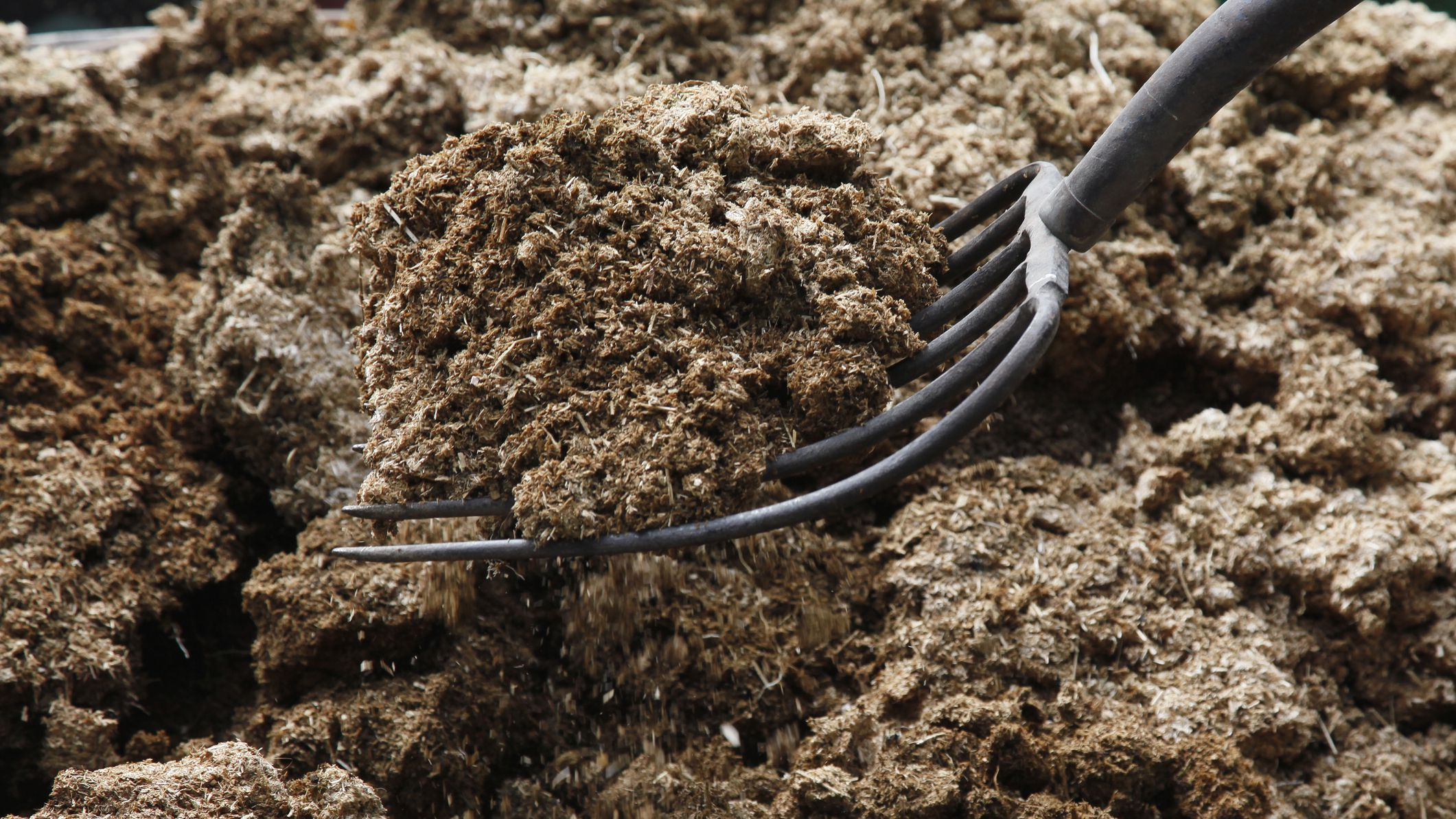 Should You Add Manure to Improve Garden Soil?