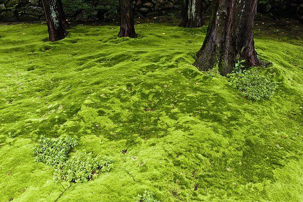 Moss lawn