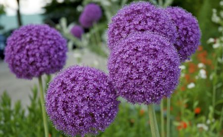 top 10 wonderful diy decorations inspired by spring top.htm top 10 bulbs to plant this fall  top 10 bulbs to plant this fall