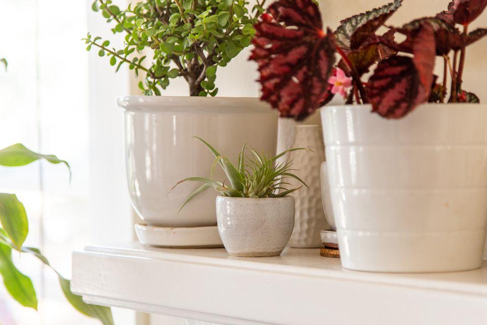 group of indoor plants