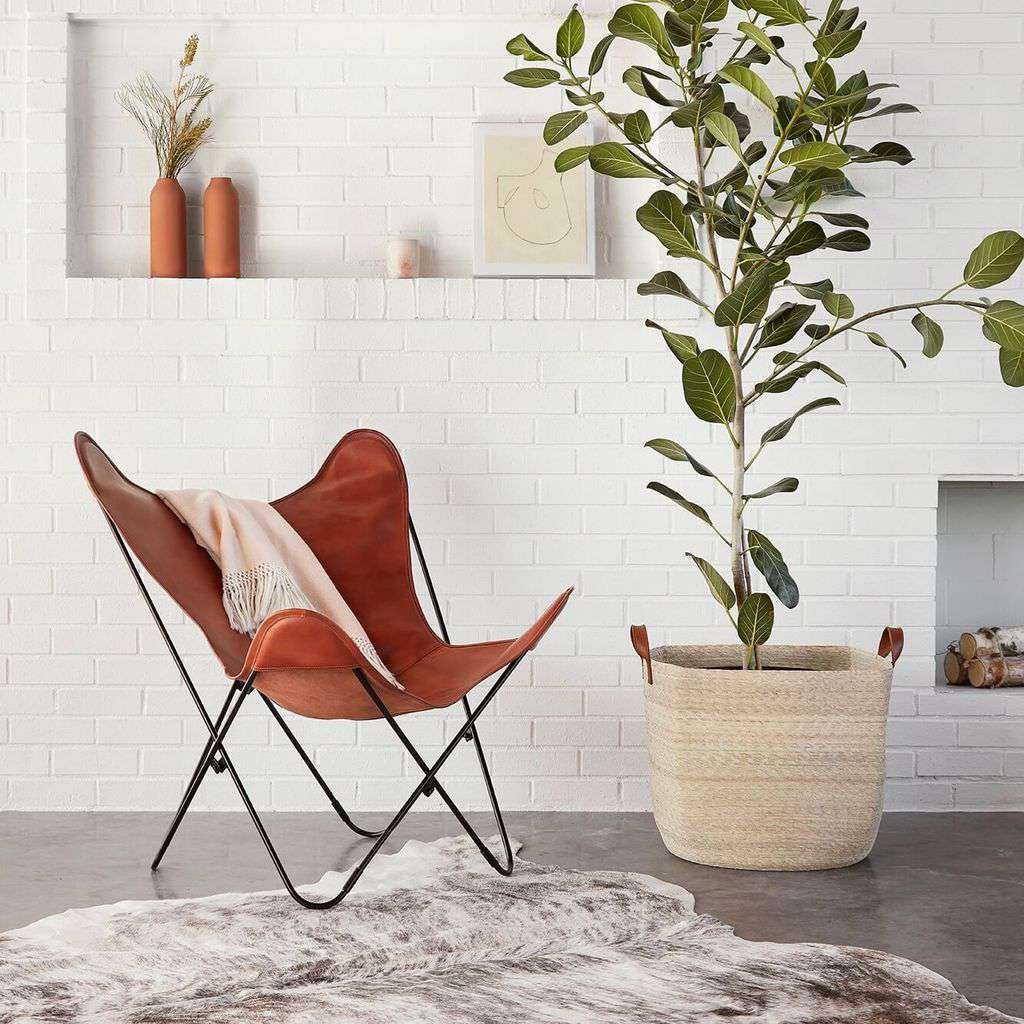 Living room with a butterfly chair and a fig tree