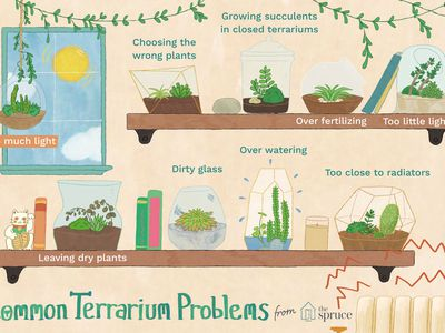 Intro On How To Make A Terrarium