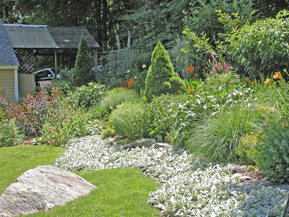 Una oreja de río de cordero sostiene un jardín de ladera en su lugar.