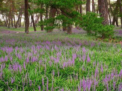 10 Plants That Fight Soil Erosion and Add Color