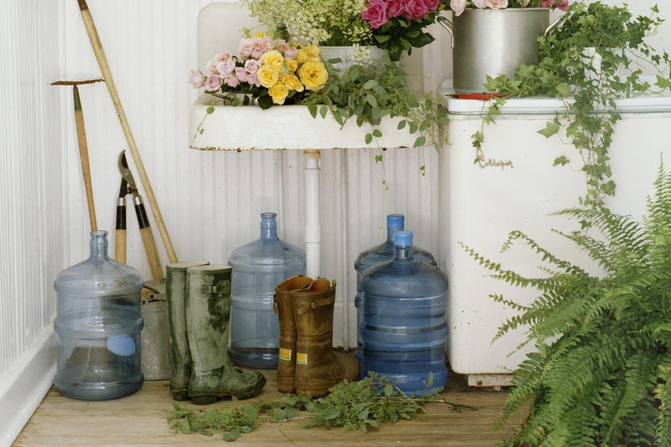 Garden shed with roses, ferns, ranunculus and ivy plant