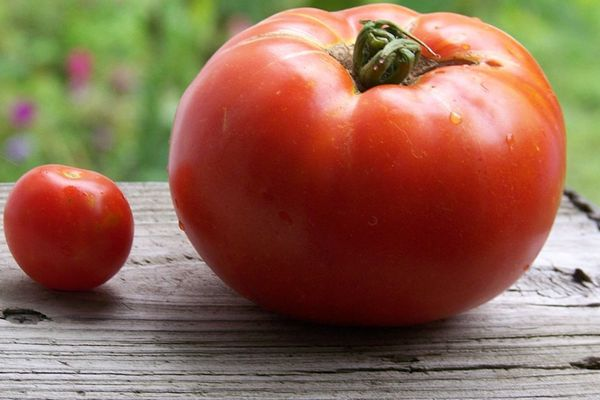 Cherry tomato next to a large tomato on a wooden table outside