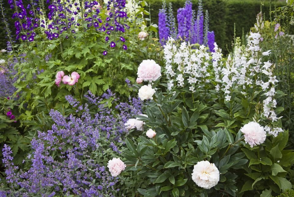 How to Plan and Grow a Cutting Garden – Cut Flower Garden Plan