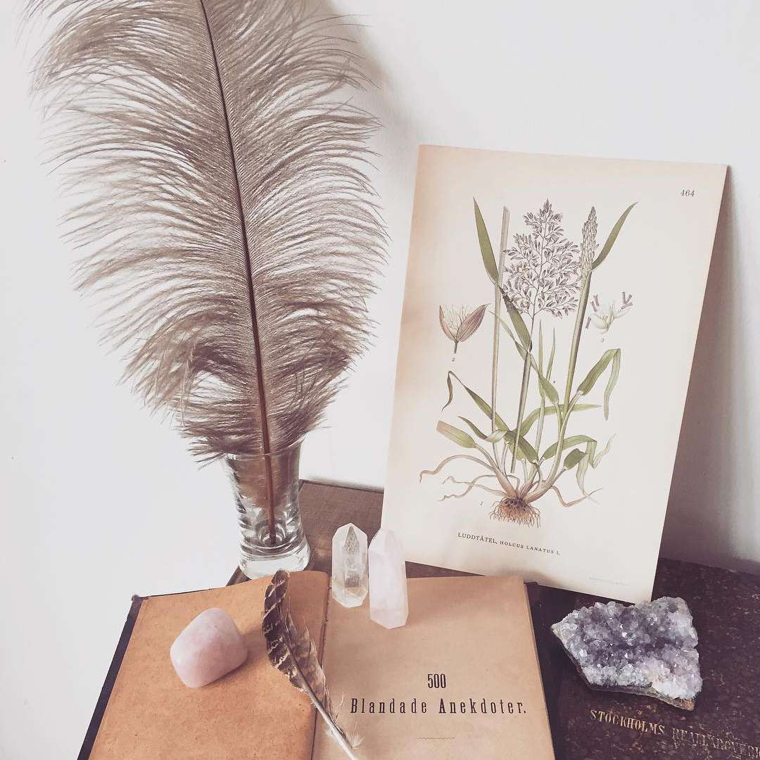 Vintage vignette with feather