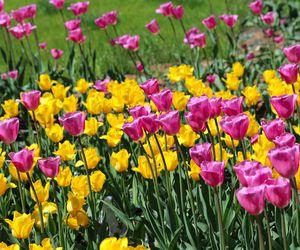 Perennial plants flowers mightylinksfo