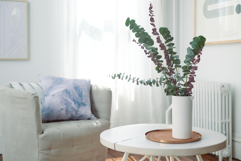 Eucalyptus Plant Garden Ideas