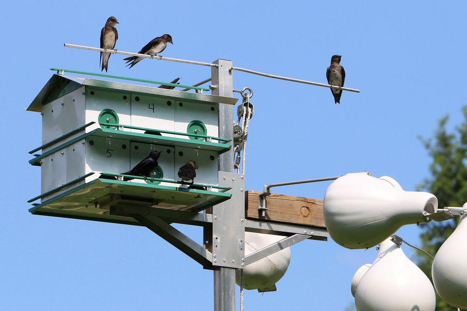 Purple Martin Houses