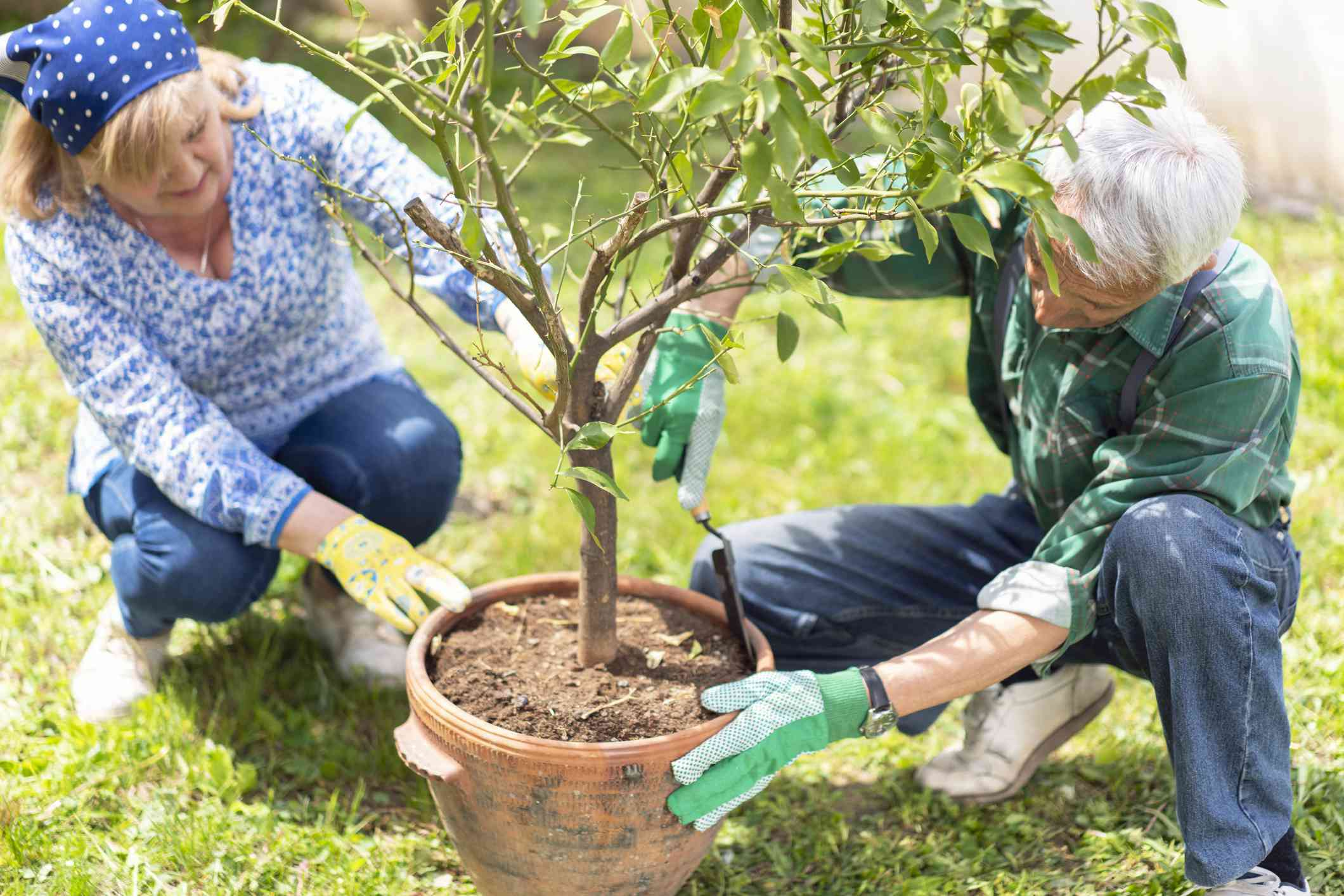 Senior couple planting together
