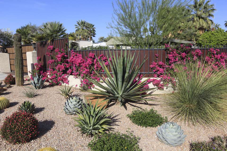 Desert garden with cactus, succulents, bougainvillea and other arid perennial plants.