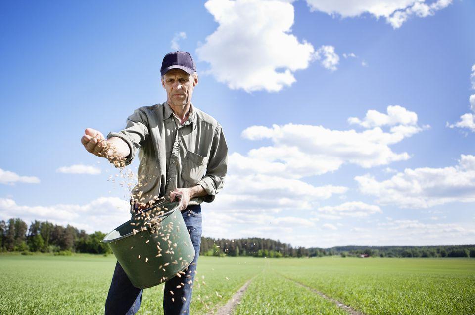 Farmer sowing seeds in field