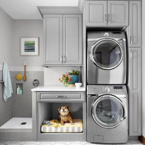 dog in laundry room