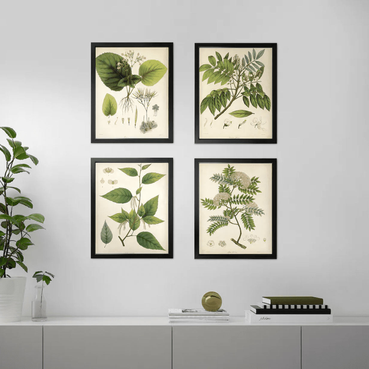 A collection of 4 botanical print posters on a wall