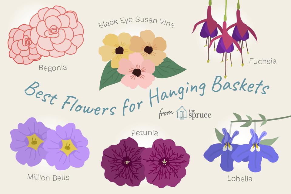 Flower hanging baskets Illustration