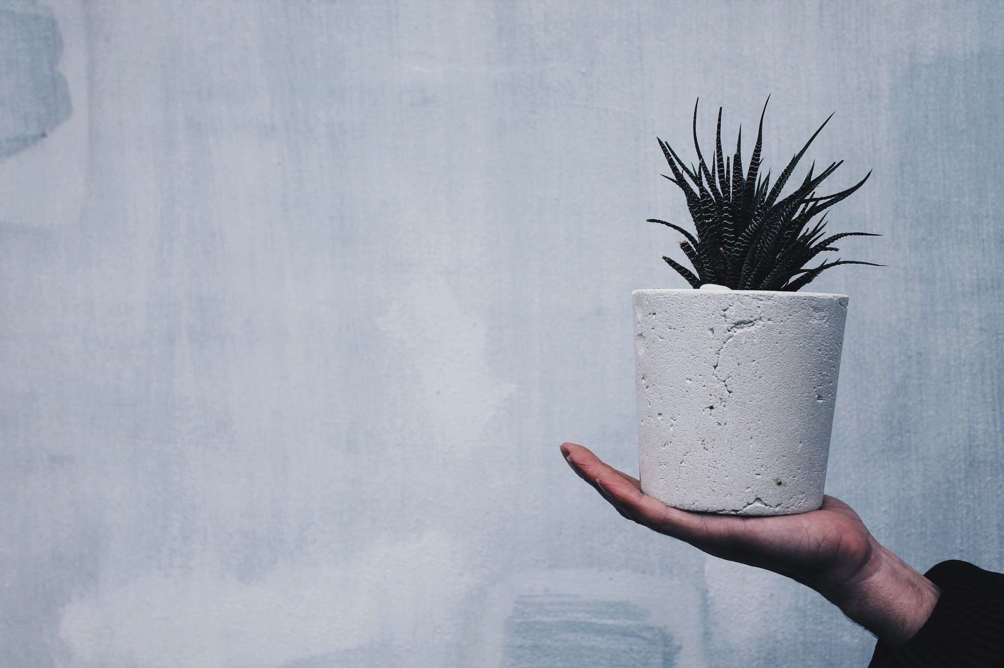 Hand holding a concrete planter with a spiky plant.