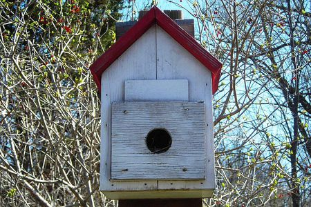 What Are Bird Roosting Boxes