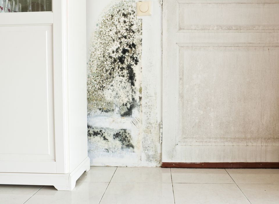Mold on wall and wood door