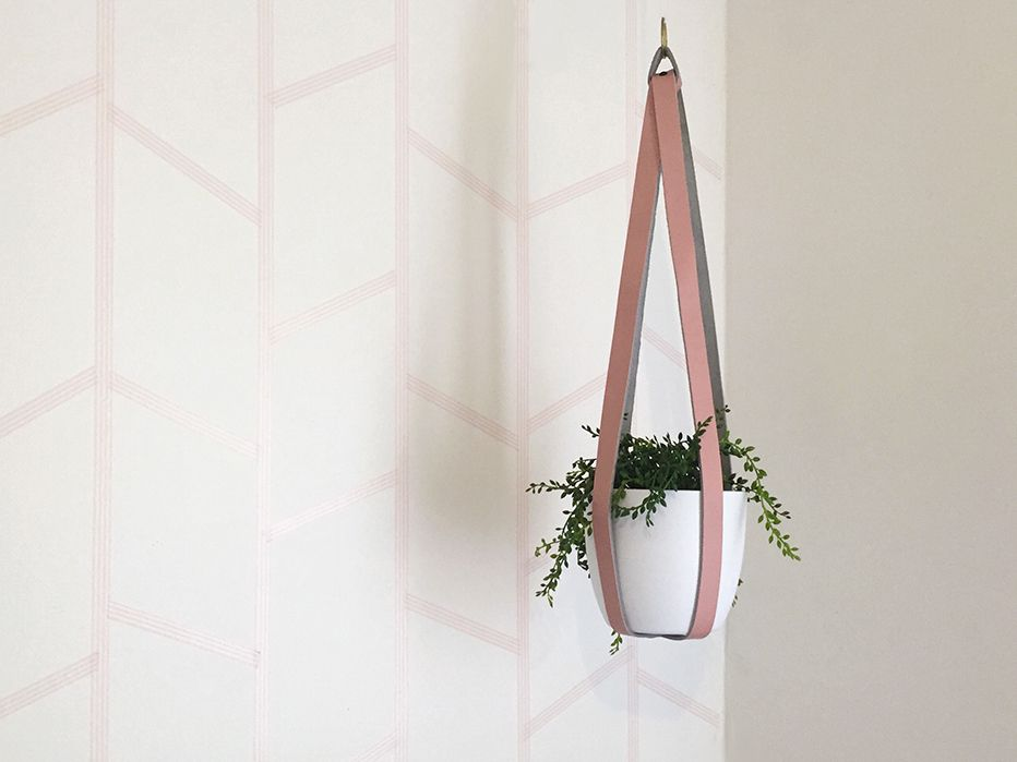 A plant in a leather hanger