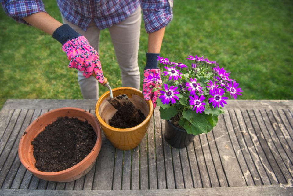 Potting Flowers - Woman Gardening