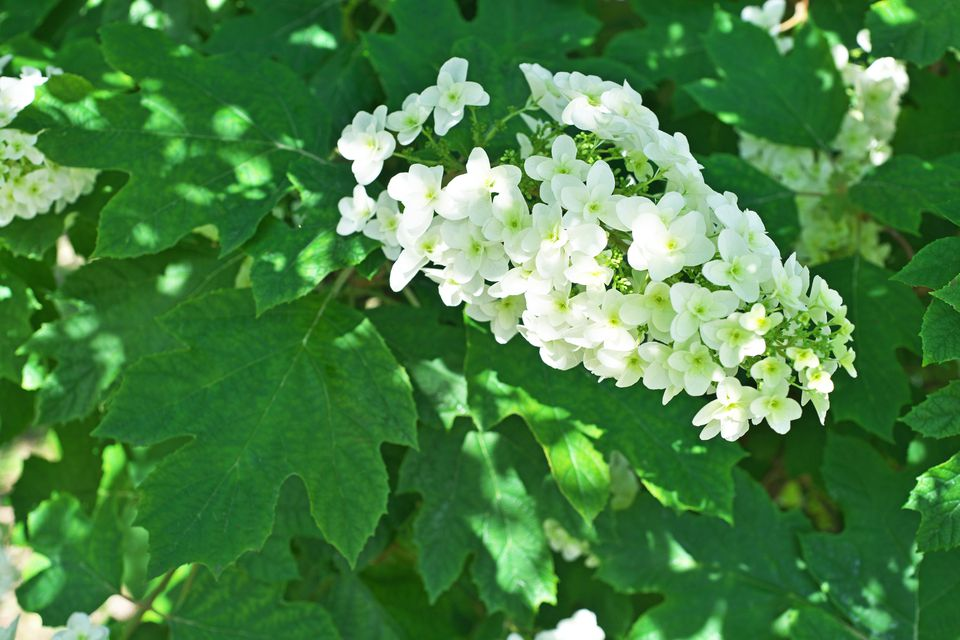List Of Shrubs 12 Kinds You Should Grow In Your Yard