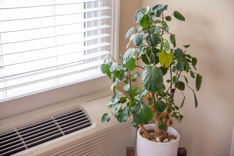 planta de interior por un respiradero