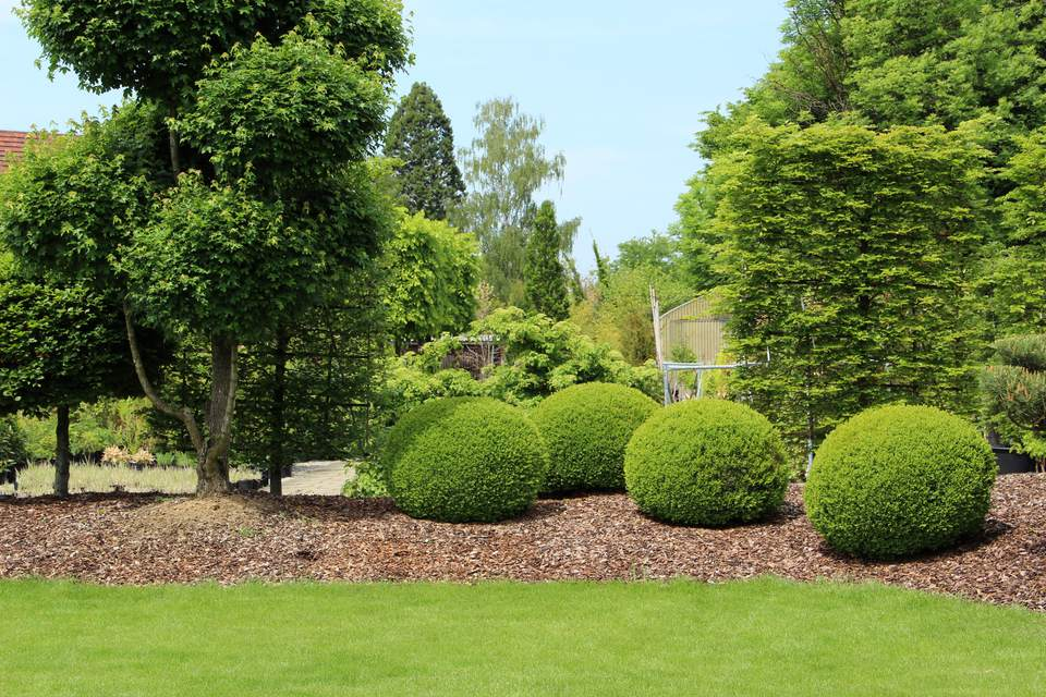 Garden design with buxus, yew, and grass