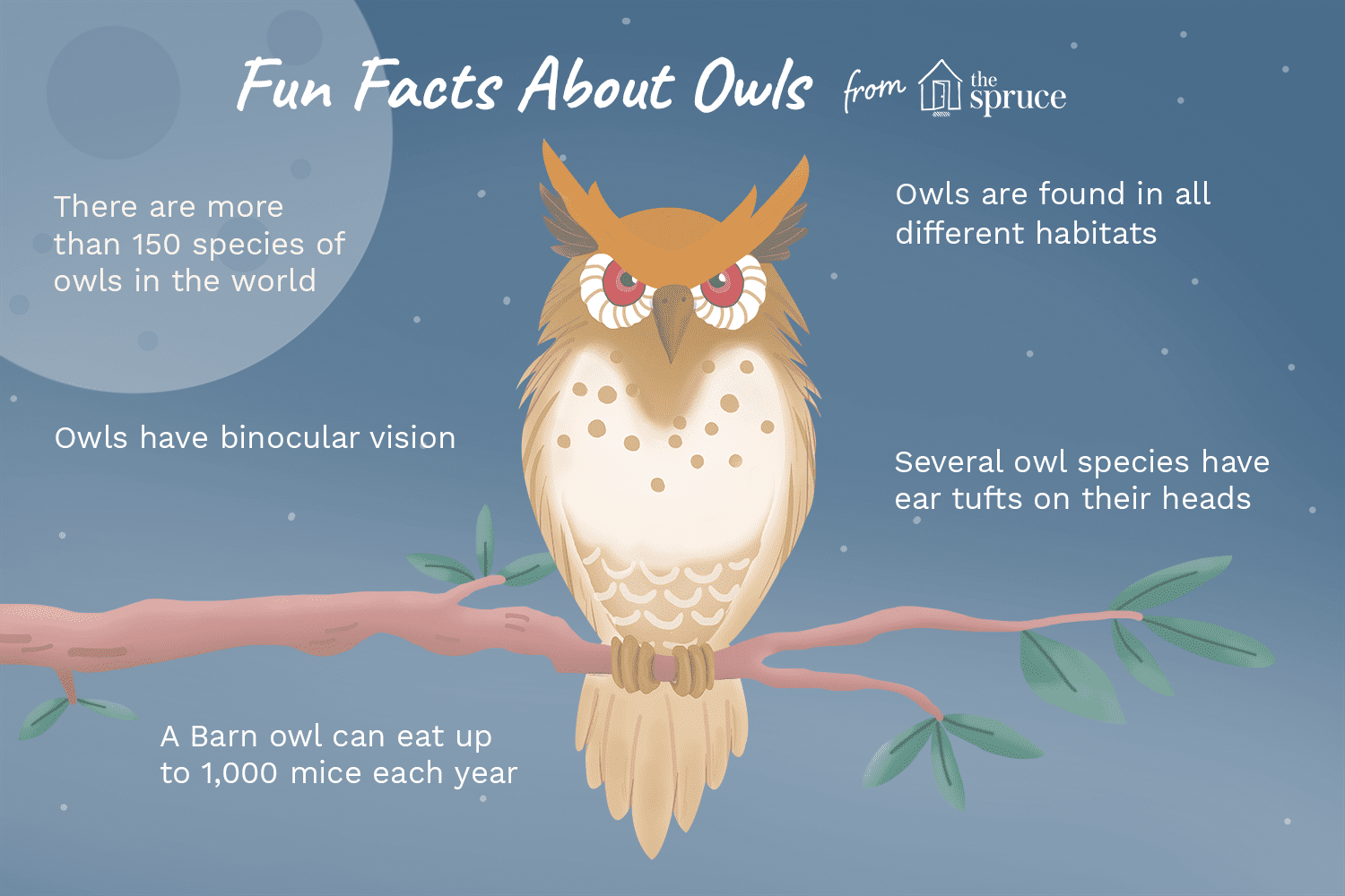 illustration of fun facts about owls