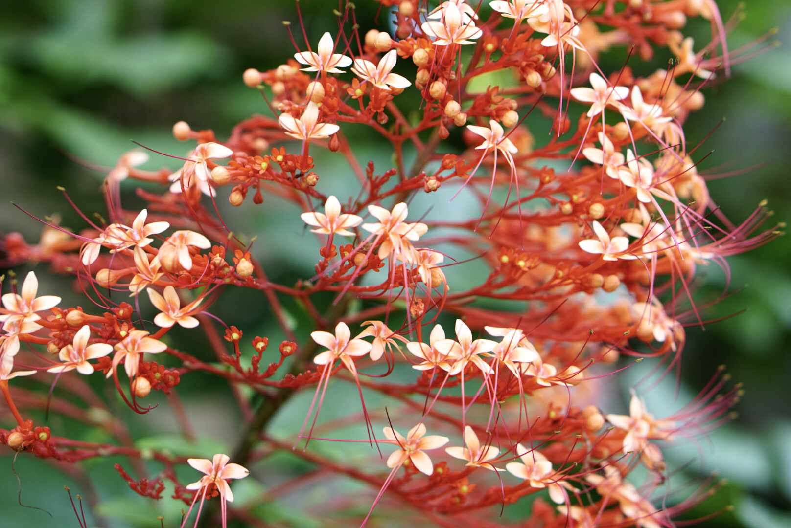 pagoda plant detail