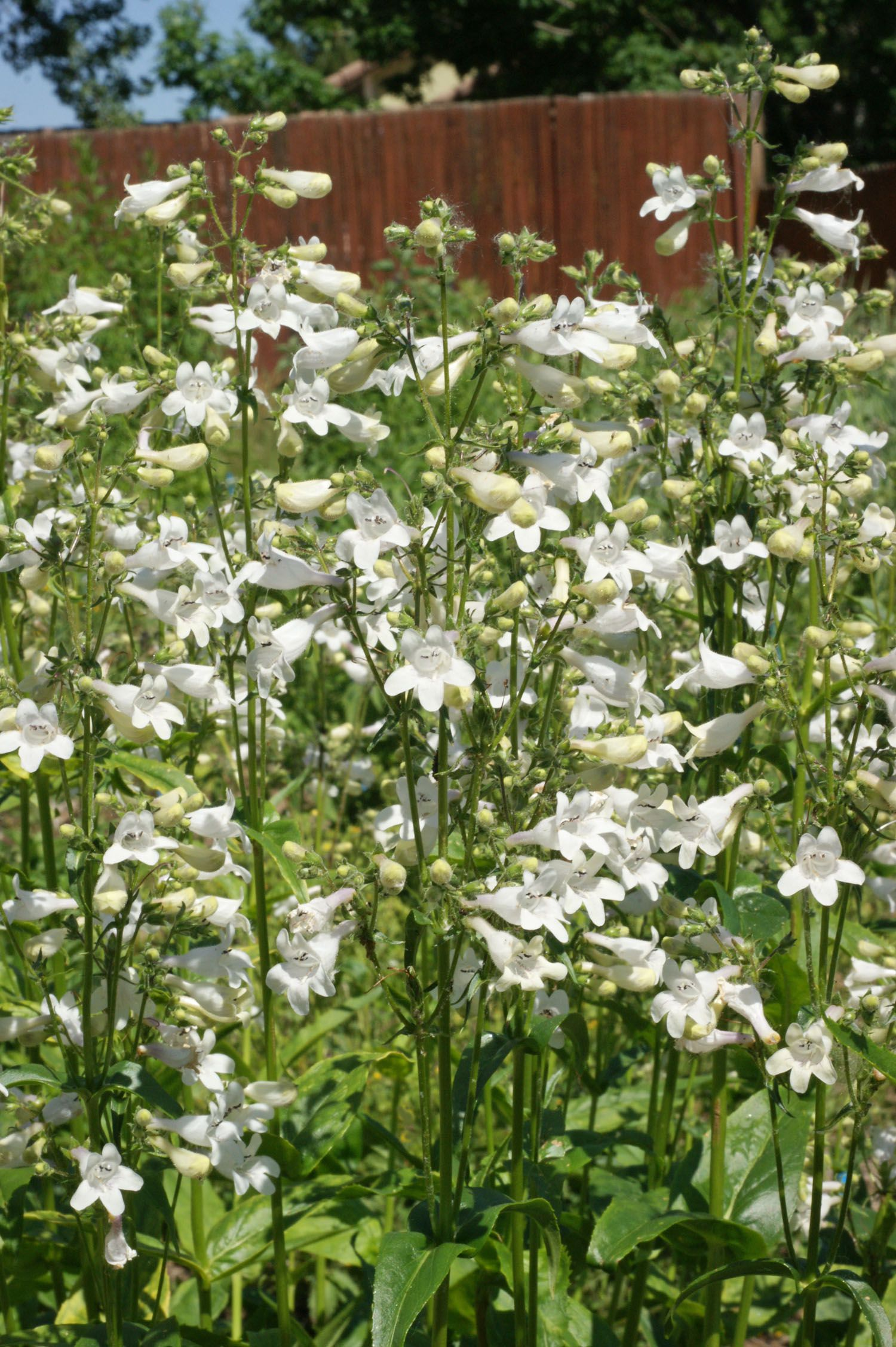 Perennials That Grow In Any Climate