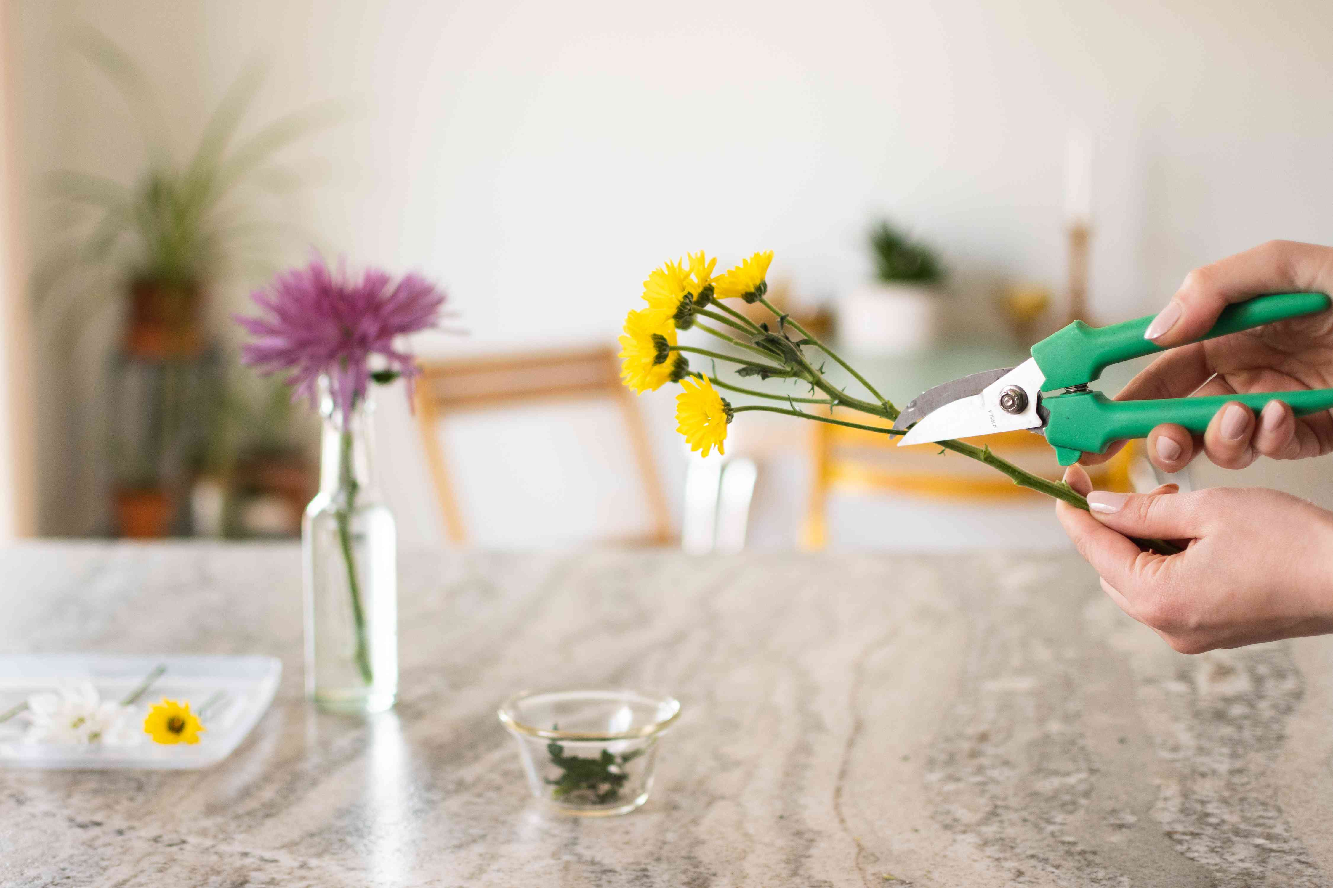 Yellow flower stems being cut with handheld pruners to prepare for drying
