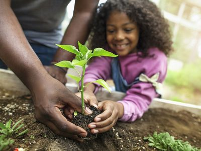 African-American father and daughter holding small seedling at community garden greenery