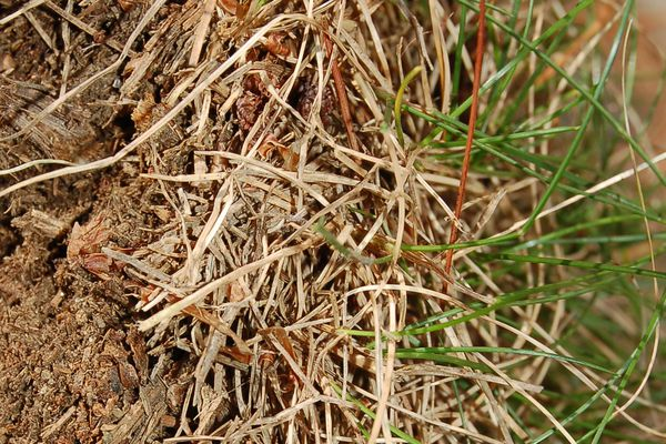 lawn thatch or dead patch of grass