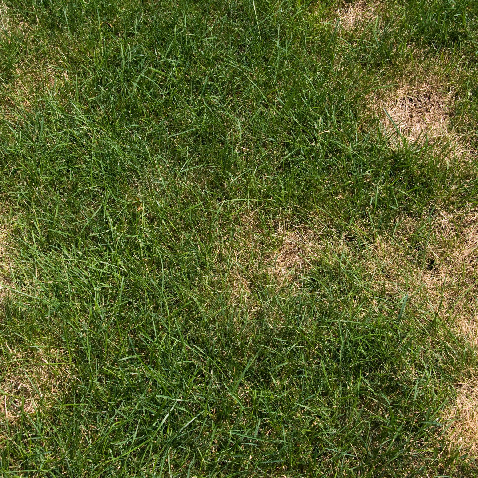 How To Get Rid Of Brown Patch Fungus On Gr