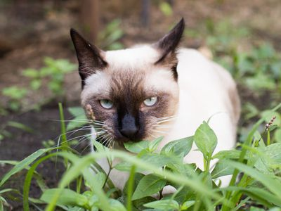 Get How To Get Rid Of Stray Cats In Your Backyard Pics ...